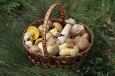 Morgan Hill….The Taste of Morgan Hill, Mushroom Mardi-Gras, July 4th Parade